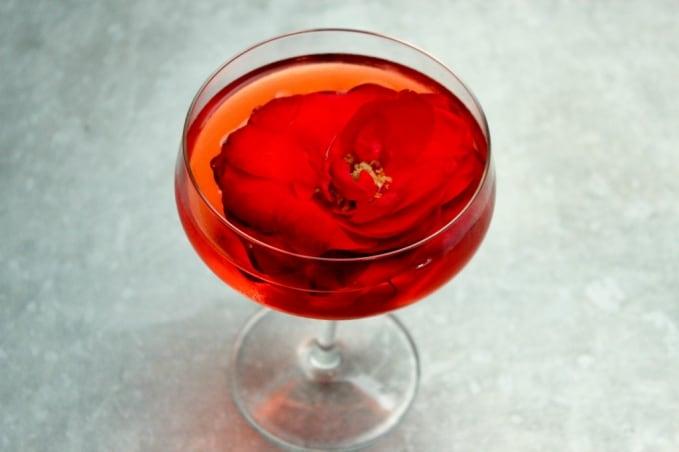 , Rose Negroni